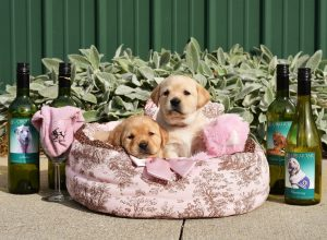 10th Annual Dinner Art & Wine for Canines - VIRTUAL @ Receptions - Loveland | Loveland | Ohio | United States